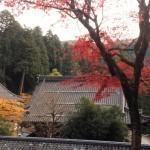 【時事】秋の永平寺~紅葉が美しい